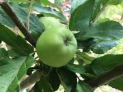 Mazás
